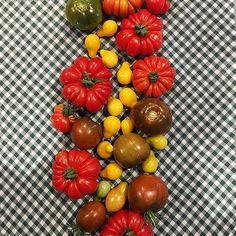 """I love growing different types of tomatoes for their colours, shapes and flavours. The yellow bell tomatoes look beautiful and are sweet and tangy. The Costoluto Genovese tommies have the deepest, richest flavour and the Black Russians (one of my favourite varieties) give off that beautiful meaty flavour. I grew all these from seeds in late November and I don't know if you remember, but I was a terrible seed raiser. Nevertheless these plants wouldn't give up and now they're giving me lots…"