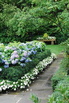 Blue hydrangeas, boxwood, and white impatiens