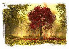 Mis imágenes favoritas: Gifs de otoño