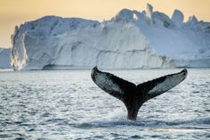 Greenland Whale Watching 2 - Discover the World of Greenland Top 6 Arctic Attractions - A World to Travel