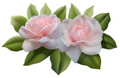 Beautiful Pink Roses PNG Image