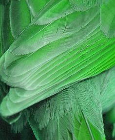 green feathers http://www.pinterest.com/pin/277815870737314683/