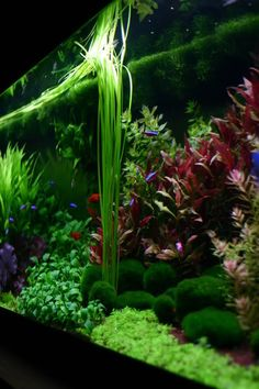 How about this dutch aquascape? - Page 5 - Aquascaping - Aquatic Plant Central