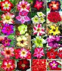 Resultado de imagem para flores as cores