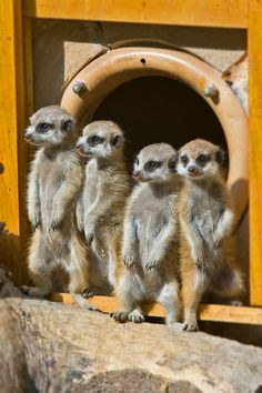 """""""All for one, and one for all"""" - Meercats"""