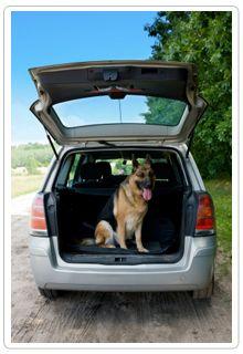 Pet Disaster Prep for Three Different Types of Scenarios