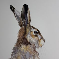 """Better Drawing This is an original ink and watercolour of a hare . It is painted on my favourite """"St Cuthbert's Mill """"watercolour paper, which measures by 310 mm. There is no better way to… - Hare Images, Hare Pictures, Animal Paintings, Animal Drawings, Art Drawings, Watercolor Animals, Watercolor Paintings, Watercolours, Acrylic Painting Animals"""