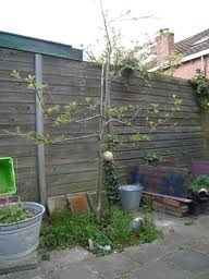 appelboompje , ook in kleine tuin
