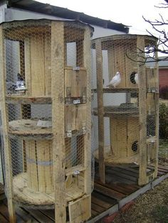 Chicken coops! Awesome!: