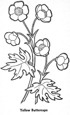 Margaret honan mjhonan on pinterest for Buttercup flower coloring pages
