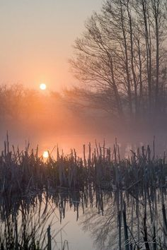 """pannekoekman: """" Sunrise pond and broken rush by dfaagaard """" All Nature, Amazing Nature, Landscape Photography, Nature Photography, Cool Pictures, Beautiful Pictures, Best Photographers, Belle Photo, Beautiful World"""