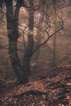 winsnap:  Magic forest | by Arsenii Gerasymenko