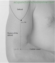 L.I.-14 Upper Arm BINAO - Acupuncture Points -1