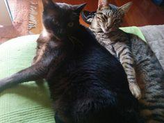 Timóteo e Chico