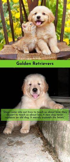 """You can always find hope in a dog's eyes."" Golden Retrievers  #goldenretrieveroftheday #goldenretrieverclub #goldenretrieverbrasil"