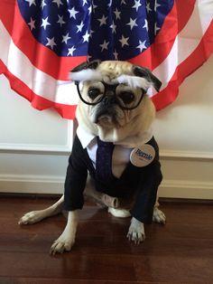 Here comes Bernie! Bernie Sanders costume Halloween 2015.