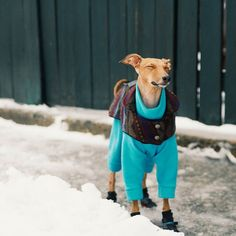 Mmm I love the feeling of crisp winter air on my snout in the morning.... #not  __  Jacket: @elanor.ca Onsie: @lokopetapparel  Boots: @poochieboots (code: IGGYJOEY for 10% off booties)