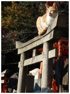 Japanese cats at Fushimi Inari shrine, Kyoto, Japan