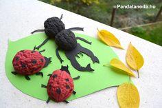 Dióhéj állatok- dióhéj szarvasbogár és katicabogár