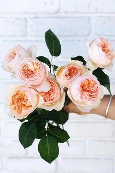 Lovely Juliet Roses