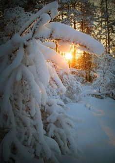 Danah Jerkovic F ( Winter Szenen, I Love Winter, Winter Magic, Winter Time, Winter Christmas, Winter Pictures, Nature Pictures, Snow Scenes, Winter Beauty