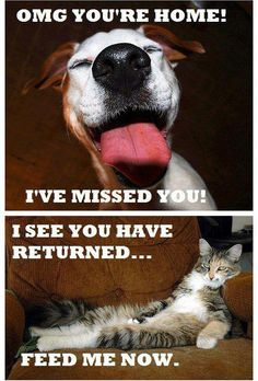 Dog vs Cat - -This is why I have dogs!! ;-)
