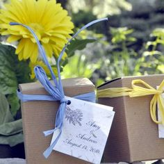 Gerber Daisy Wedding Favors in Gift Boxes: Plant indoors or out, with potted centerpieces they are beautiful