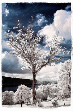 Tutorial para obtener una magnífica fotografía infrarroja.  Imagen de Bram & Vera