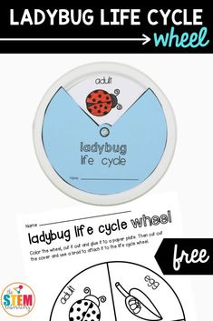 This fun ladybug life cycle craft wheel is the perfect activity to go along with a bug science unit. Combine art and science in one project that kids are sure to love! This FREE printable includes all four stages of a ladybug's lifecycle. Perfect for pre k through first grade! #ladybugscience #bugunit #artsandcrafts 2nd Grade Class, First Grade, Bug Activities, Learning Activities, Kindergarten Science, Kindergarten Worksheets, Life Cycle Craft, Ladybug Crafts, Life Cycles