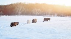#blizzard2k16 #madisonfields #farmlife Miniature Horses, Montgomery County, Farm Life, Acre, Fields