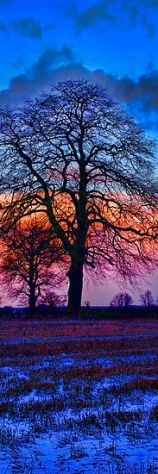 The Winter Tree At Sunrise