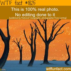 Camel Thorn Trees, Namibia Photograph by Frans Lanting, National Geographic (via Namib-Naukluft Park Picture – Travel Wallpaper – National Geographic Photo of the Day) Frans Lanting, Foto Real, Park Pictures, Travel Wallpaper, Wtf Fun Facts, Random Facts, No Photoshop, National Geographic Photos, Small World