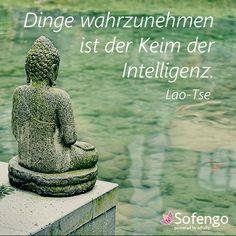 Dinge Wahrzunehmen Ist Der Keim Der Intelligenz Lao Tse Zitat Buddha