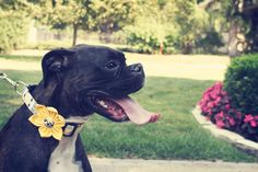 love this wedding party member! Photo by Angela #dogsatweddings #MinneapolisWeddingPhotographer