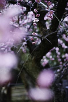梅 by Ryugeju on Flickr.