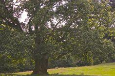Tree  ©S.G.Rigney