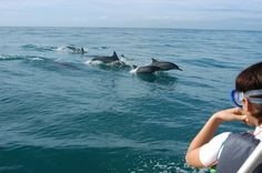 The Excursion - Dolphin Excursions Oahu