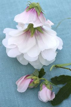 Make Hollyhock Dolls with your kids. Easy how to. Yay for nature!