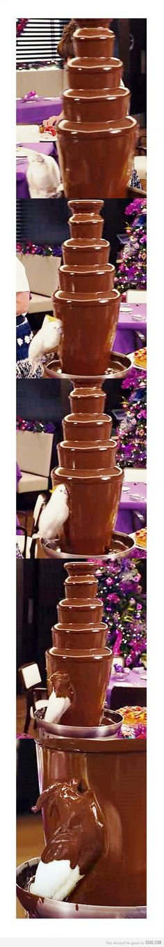 chocolate addicted parrot. This would so be my bird! @Sarah Lane, is this the Golden Corral Fountain? lol