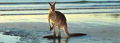 Prenota giri turistici e attrazioni di Australia con SGF Trade srls