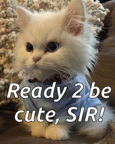 Mr cutness | http://unusual-cats.com/mr-cutness/