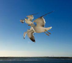 Bird, Animals, Animales, Animaux, Birds, Animal, Animais, Dieren