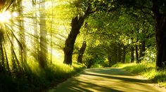 sunbeams, road through forest, green trees x 800 px] - Nature - Pictures and wallpapers Green Nature Wallpaper, Summer Wallpaper, Hd Wallpaper, Sunshine Wallpaper, Nature Verte, In Natura, Nature Hd, Nature Photos, Forest Path