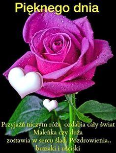 Good Morning, Rose, Flowers, Plants, Pictures, Polish, Buen Dia, Pink, Bonjour