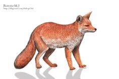 동물 일러스트 붉은 여우  여우 일러스트 여우 세밀화 water color