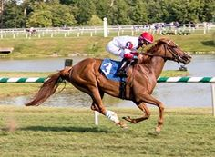 Two Turf Records Fall at Laurel Park: Coastal Sea ran 5 1/2 furlongs in 1:01 and Heiko won in 1:40.47 for 1 1/16 mile 7/24/16