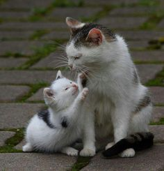 Mommy kitty with her precious little baby