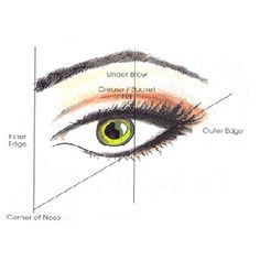 A lot of women ask me what is the correct way to tweeze their eyebrows. Here is a perfect guide. Actually, if your eyes are close set, start the inner brow by lining in directly with the inner corner of your eye. Notice that the brow ends at the outer corner of the eye, NOT the extension of the eye shadow. Happy tweezing!