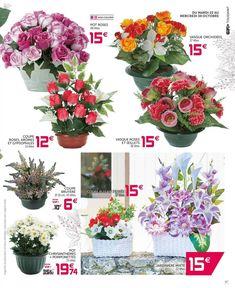 3215 Meilleures Images Du Tableau Plantes Et Végétation
