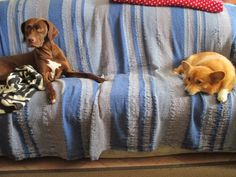 pieces of pics : dogs...on the sofa
